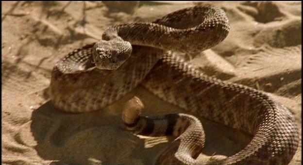 film venomous